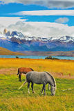 On the shore  grazing horses Royalty Free Stock Images