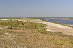 Shore Habitat of a Gulf Coast Refuge Royalty Free Stock Image