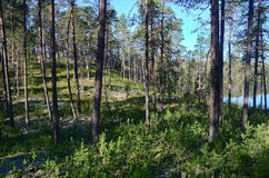 Shore of Karelian lake Stock Photos