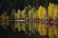 On the Shore of a Lake in Autumn Stock Photos
