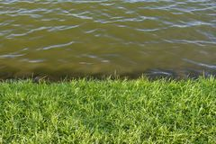 The shore of the lake is covered with green lawn grass royalty free stock image