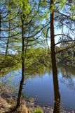 The shore of the lake in the forest. Trees above the water. Sunny day. Royalty Free Stock Image