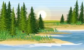 The shore of the lake and the meadow behind it royalty free illustration