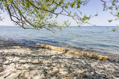 Shore of Lake Ontario with a tree log. At a stony, rocky beach on Lake Ontario near Oakville with peebles and a tree log in the blue water and a tree casting Stock Photo