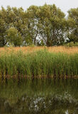 Shore of the lake with reeds and trees reflected. In water Stock Photo