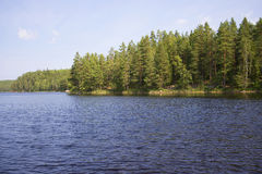 The shore of lake Repovesi sunny day Stock Images