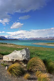 On the shore of Lake Tekapo. Royalty Free Stock Image