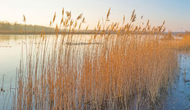 Shore of a lake in winter Stock Images