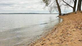 Shore of a large lake and slowly rolling wave on the sand with yellow leaves slow motion. Shore and lake, which reflects beautiful autumn woods stock footage