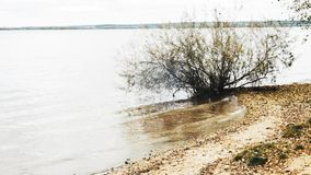 Shore of a large lake and slowly rolling wave on the sand with yellow leaves slow motion. Shore and lake, which reflects beautiful autumn woods stock video footage