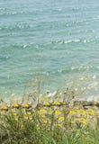 Shore line flowers Stock Image