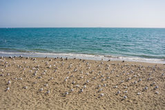 A shore of Mediterranean sea and plenty of seagulls sitting on the sand, Torremolinos Stock Photography