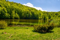 Shore of a pond among the forest in springtime. Lovely nature scenery in mountains Royalty Free Stock Images