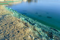 The shore of a pond infected with cyanobacteria. Blue-green algae is an ecological disaster Stock Images