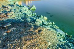 The shore of a pond infected with cyanobacteria. Blue-green algae is an ecological disaster Royalty Free Stock Photography