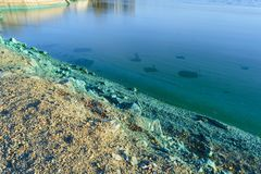 The shore of a pond infected with cyanobacteria. Blue-green algae is an ecological disaster stock photos