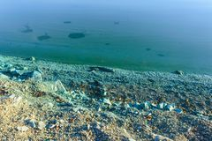 The shore of a pond infected with cyanobacteria. Blue-green algae is an ecological disaster Stock Image
