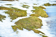 On the shore of the pond, the snow melts Royalty Free Stock Photo