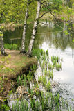 Shore of the pond in spring Park. Shore of the pond with birch trees in spring in the Park stock image