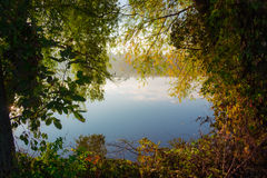 Shore of the pond with trees and bushes autumn Royalty Free Stock Image