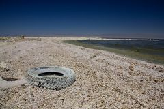 Shore at the Salton Sea Stock Image