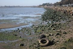 Shore of San Francisco Bay at Gilman St Royalty Free Stock Photos