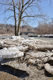 Shore side ice floes and tree along Humber River Royalty Free Stock Photo