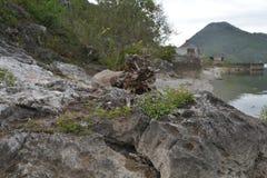 Shore of the Skadar Lake. Large stones lie on the shore of the Skadar Lake at Montenegro Royalty Free Stock Image