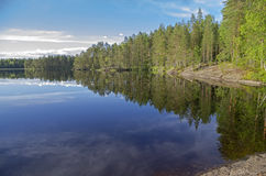 Shore of a small forest lake. Royalty Free Stock Photo