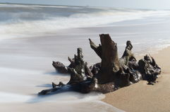 Shore snag on the Azov sea. Royalty Free Stock Images