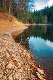 Shore of Synevyr lake. Fallen autumn foliage on the rocky bank. wooden pier in the distance. beautiful calm evening royalty free stock images