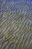 Shore texture and curved line Royalty Free Stock Photo