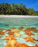Shore of a tropical beach with starfish underwater Royalty Free Stock Photos
