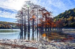 Cypress trees dot a pond in Sukko. stock photography