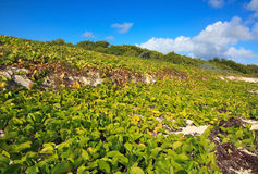 Shore was covered with vegetation. Stock Photography