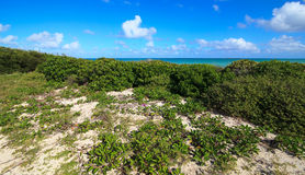 Shore was covered with vegetation. Royalty Free Stock Photo