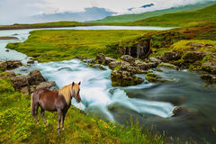 On the shore of waterfall horse grazing Stock Photography