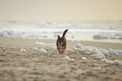 Shore, Wildlife, Beach, Sand