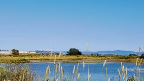 Shorebird Marsh in Corte Madera, California. This marsh in Marin County provides both paved and dirt trails for walking, running and biking. It serves as a Royalty Free Stock Photos