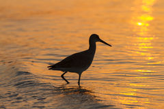 Shorebird Silhouette Stock Photo