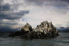 Shorebirds in Kachemak Bay Alaska. Shorebirds including cormorants, common murres, kittiwakes on a small rocky island near Gull Island in the Kachemak Bay Stock Photo
