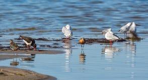 Shorebirds. At the sand beach Stock Photos