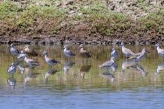 Shorebirds  840650
