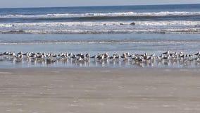 shoreline Lizenzfreies Stockfoto