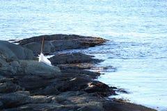 shoreline Zdjęcie Stock