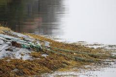 shoreline Obraz Royalty Free