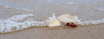 Shoreline. Seashells washed up on beach Stock Images