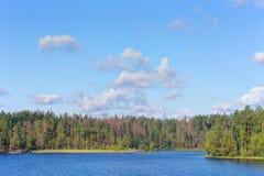 Shoreline av den wood sjön Arkivfoto