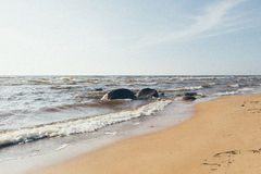 Shoreline of Baltic sea beach with rocks and sand dunes - grainy Royalty Free Stock Images