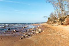 Shoreline of Baltic sea beach with rocks and sand dunes Royalty Free Stock Images
